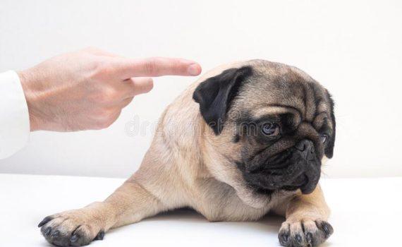 [MASCOTAS] Cómo denunciar el mansplaining hacia los animales. ...